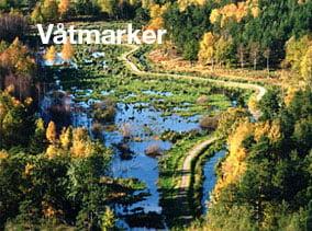 Våtmarker